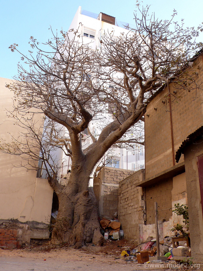 "Some trees are held as being sacred in Senegal, and no level of ""human progress"" is ever allowed to remove them..."
